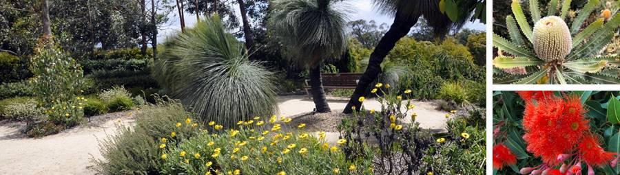 Image of Cranbourne Botanic Gardens Walk. Join us