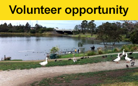 Image of Join us as a Walking Buddy in Broadmeadows. A wonderful volunteer role.